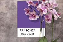 Color of the Year – Ultraviolet / interior design, design, inspiration, layout, room decor, living room, office, family room, home, house decor, blueprints, carpet, floors, flooring, home flooring, purple decor, violet, Pantone