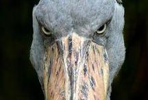 Animals facial expression (Výrazy tváře)