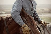 Horses / by Nancy Birkenstock