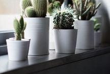 Cactus Porn / Cactusporn here