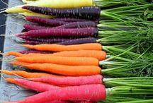 Garten / Ab in den Garten ... Hier geht es ums gärtnern, um Gemüse- und Kräuteranbau und vieles mehr! :-)