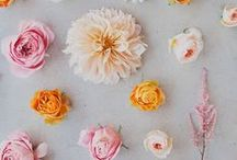 ANNIE'S GUIDE   PETALS / Brighten up your day with something pretty