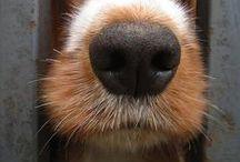 Animales & Mascotas / Los animales hacen nuestra vida más linda. Un tablero para morir de amor.