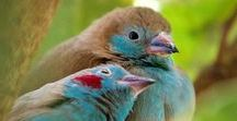 Birds (ptáci)