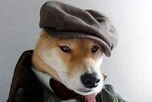 Perros  / Fotos curiosas de perros