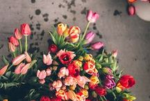 FLOWERS* / Flowers, Fleur, Flor, Fiore, Bloem, Bunga, Pua, FLOWERS!