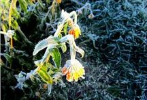 My photography: Halla Frost Frozen / Valokuviani: Winter is coming in North october