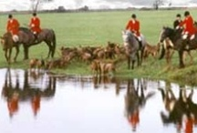 Foxhunting / by Caitlin Shilan