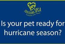 Hurricane Season and Disaster Preparedness