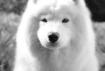 Pet Articles. Собаки.