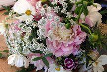 Pompon : Bouquets et compositions