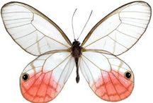 Framed Butterflies and Moths / pour Bérénice