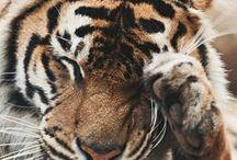 Animals i adore