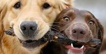 about dogs - and other cute funny furry