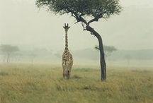 Take My Breath Away - Safari