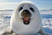 Animals / Too cute to be believed