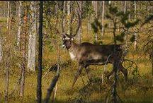 Vaara-Suomi / Suomen maisema-alueet: Vaara-Suomi