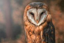Real owls/ echte uilen / Uil owl vogel bird natuur nature wildlife / by Owls Uiltje