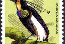 New Guinea (Papua's)