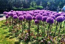 verts jardins ou pas / nature, jardins sauvages, jardins civilisés,
