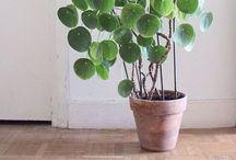 Green Fingers / Gardening, indoor plants, tips and tricks