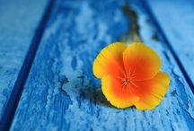 Blue and Orange / Pinterest thrives on the free sharing of images.  Please feel free to repin as many of my pins as you like. / by Kaleidoscopy