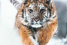 Into The Wild / Дикие животные