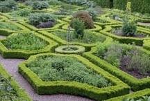 Herbs & Kitchen garden
