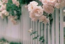 flowers, bushes