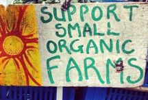 Support The Family Farm / This Chef is all about the family farm, organic and absolutely NO GMO's. I think it wrong that chemical companies can buy politicians to poison the very people they serve. Support your local farm and search out organic everything when ever possible. ESP NO GMO's Its your children's lives and yours!!
