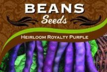Beans - All Things Beans / Green beans, pole beans, legumes, peas, yellow, wax and fava. They are all here. Organic and No GMO's. Grow your own from certified seeds. Its easy and you will not have to worry about what your eating.