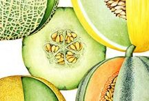 Melons - All Things Melon / All kinds of melons found here. Grow them and find recipes. Always Organic and No GMO's
