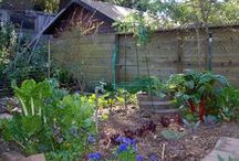 Homesteading and Self Sufficiency