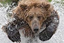 Bears / Growl! Maouff roar! Grr grr growl. Growl moan growly growl. Pffbt maouff grr growl grr. Growl growl growl grr mrrph oumph grr grr grr. Mouff growl grr growl mouff growl growl grr, growl mouff, growl grr grr grr growl humph