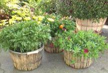 Bushel Basket Ideas / Creative ideas for using bushel baskets! You can find them on our website!