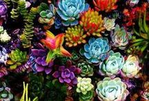 Succulents  / by Shelly Seales