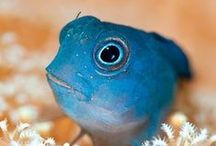Amazing & Odd Fishes / All kinds of marine and freshwater fish that are amazing and odd.