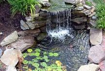 Ponds and outdoor aquaria / Enjoy fishkeeping outdoors. Whether it be keeping goldfish, turtles, or pond plants, there is a wealth of inspiration out there.
