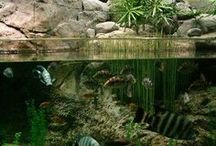 Biotope / Biotope aquariums are the essence of the natural habitat with rocks, plants, fish and water conditions just as they are in nature. A purist's haven.