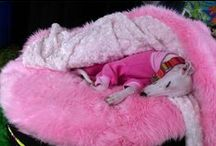 Dog Bed and Blanket Combos / Our furniture grade foam filled beds and super soft blankets with rose backing. Maybe a cubby or two, as well :-)