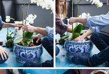 Orchids!!!!