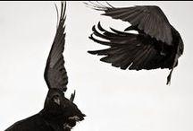 oc :: gabriel / [ blind angel ]