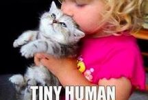 Cats - all things from funny to cute / Creepy cat lady