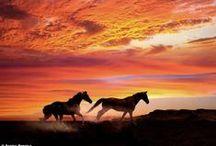 LULU chevaux