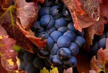 KRÓLESTWO   BACHUSA / Wino , winnice, potrawy z winem