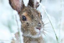 ❆☃❅ WINTER .. zima ..❆☃❅ / zima,śnieg, pejzarze, zwierzęta, rośliny