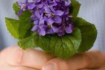 KONWALIE   i  FIOŁKI - / Rośliny, kwiatki, konwalie,  fiołki, przedmioty, ozdoby, kartki