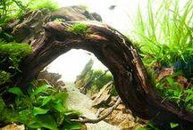Aquarium / Aquariums, Fish, Aquascaping and other useful items