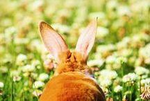 konijnen / by johanna c