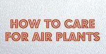 Air Plant Decorations / Air Plant Terrariums, Living Home Decor, and Air Plant Care <3